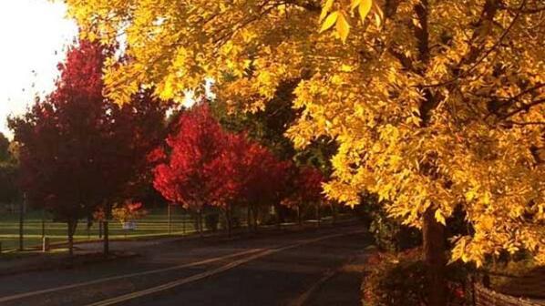 Portland leaves